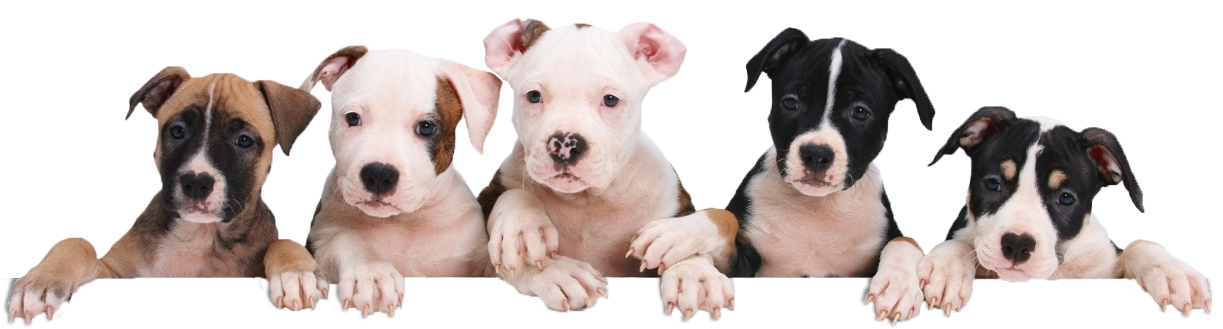 Petland joplin puppies for sale puppy products fish reptiles petland joplin cute puppies for sale solutioingenieria