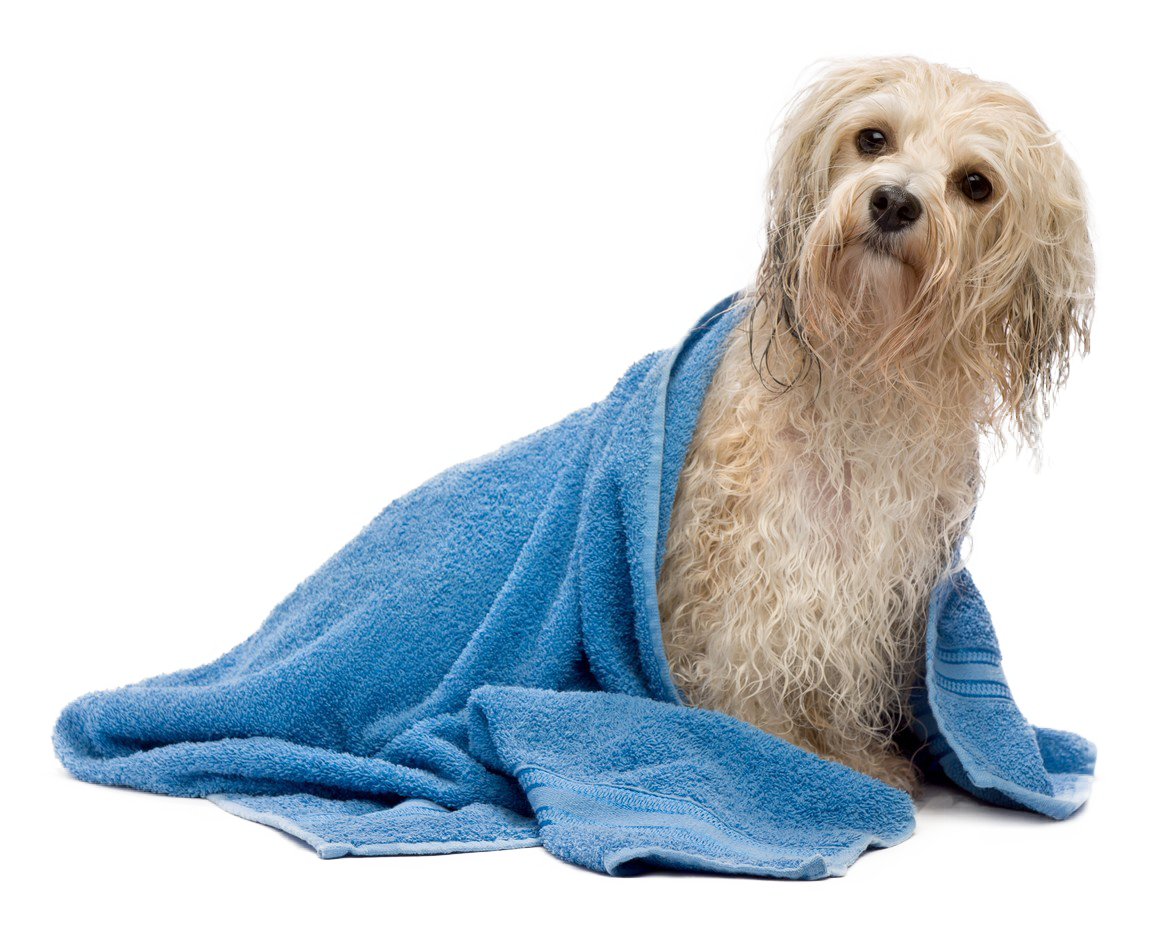 Petland joplin grooming spa bath petland joplin dog bathing service solutioingenieria Choice Image