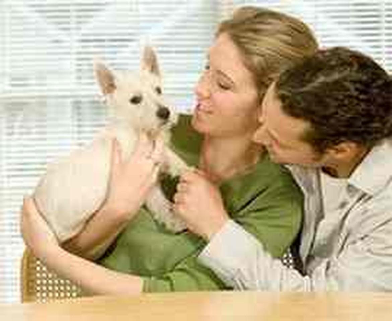 Petland Joplin Adopt-A-Pet family Homeless Pets Care