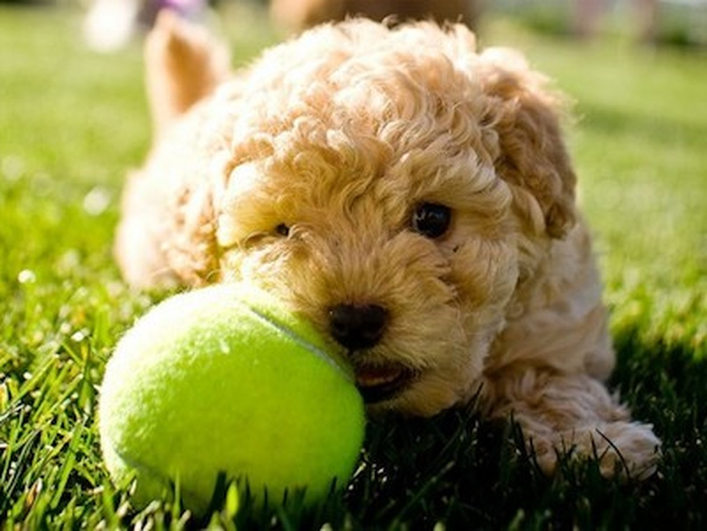 Petland Joplin Puppy Names